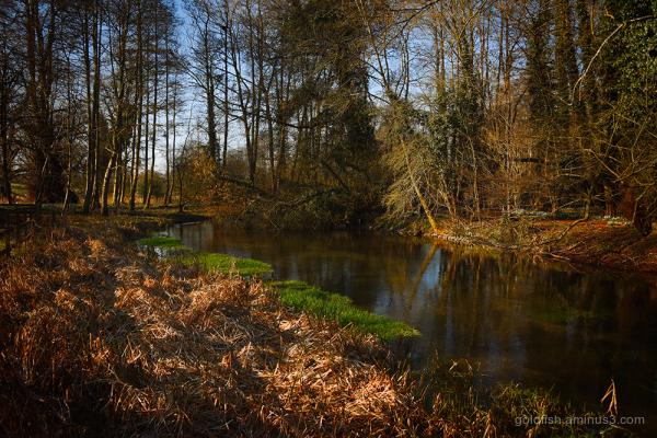 River Lambourn iv