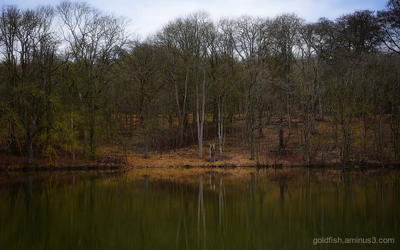 Great Lake Reflections