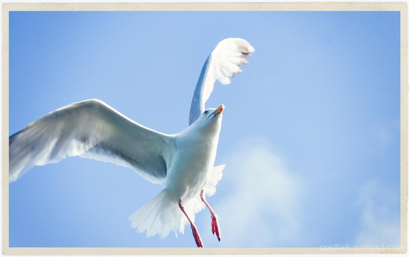 Gull Revisited