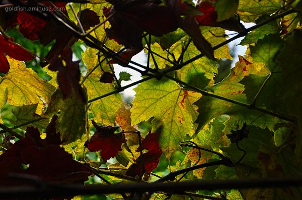 Autumn Entropy
