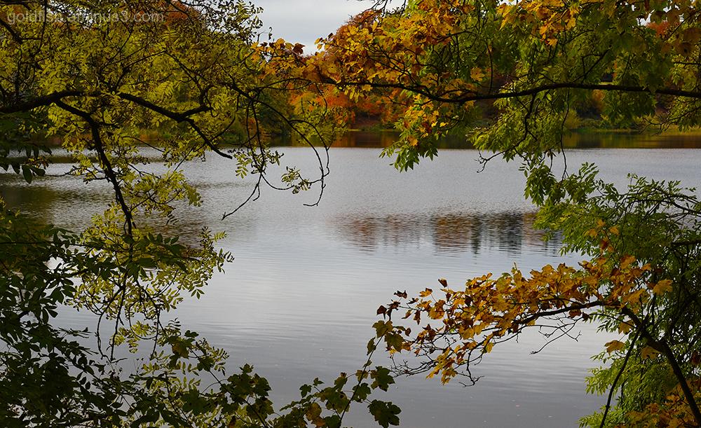 Autumn Colours iv