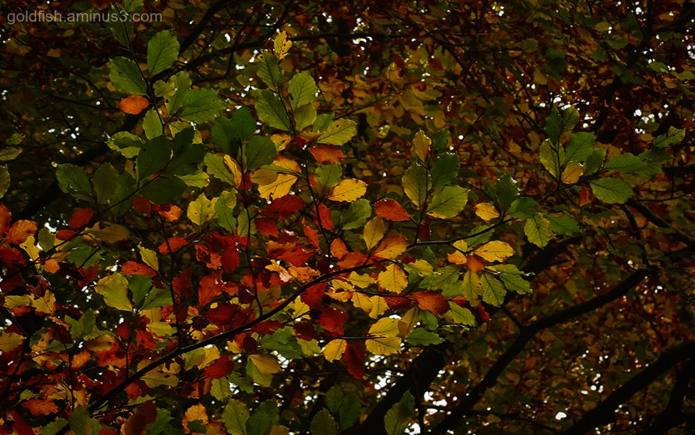 Autumn Colours v