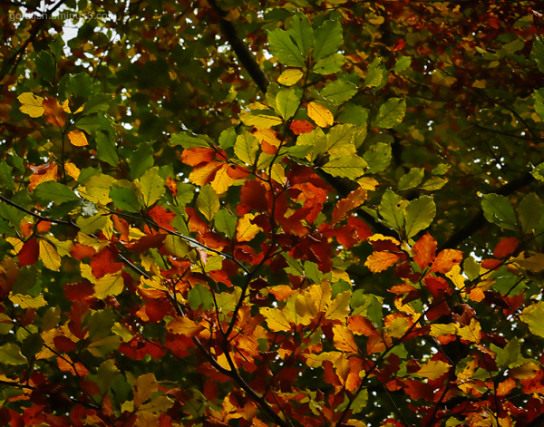 Autumn Colours vi