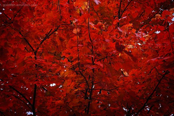 autumn colours blenheim palace