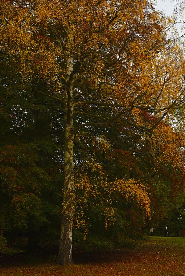 Autumn Colours xii