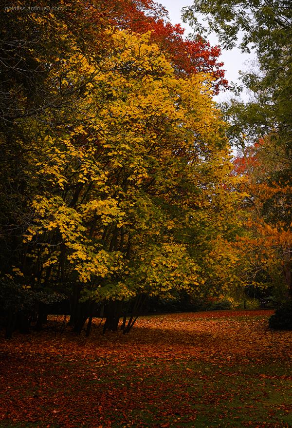 Autumn Colours xiii