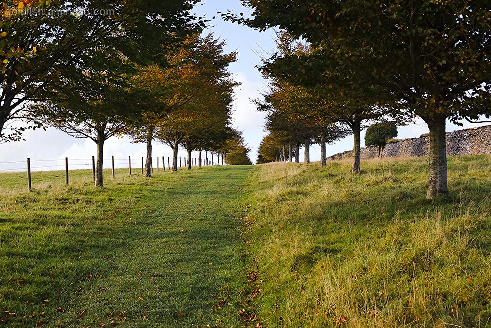 Autumn Colours XXVIII