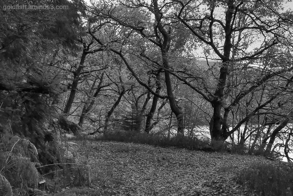 Loch Drunkie View VIII