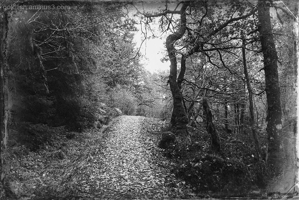 Loch Drunkie View XII