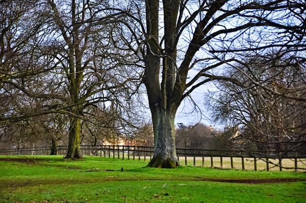 Blenheim Palace X