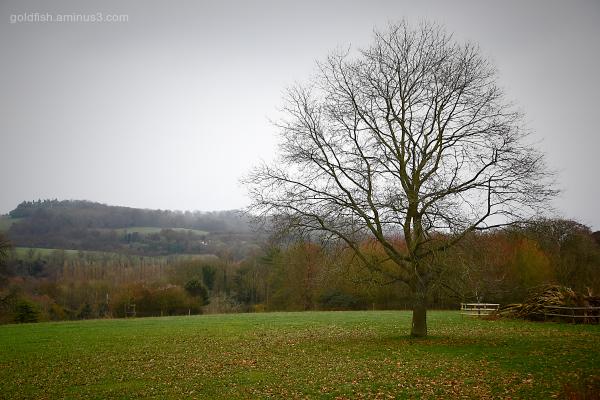 Basildon House Park Estate