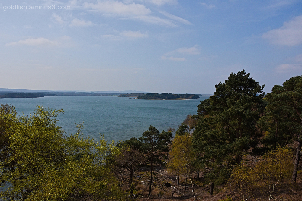 Furzey & Green Island - From Brownsea Island
