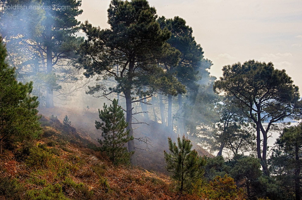 Smoke - Brownsea Island