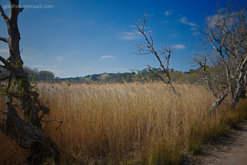 Nature Reserve II - Brownsea Island