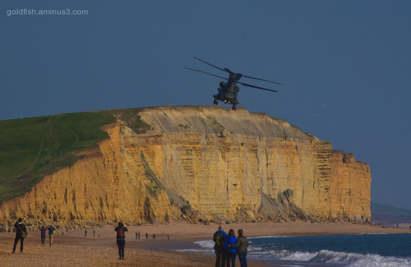 Chinooks at West Bay