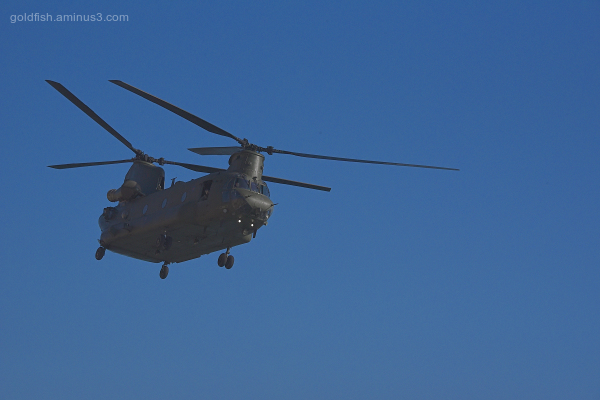 Chinooks at West Bay II