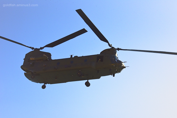 Chinooks at West Bay III