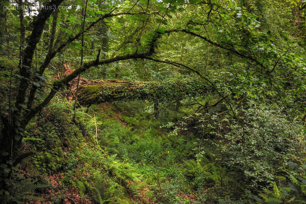 Lydford Gorge, Cornwall IV
