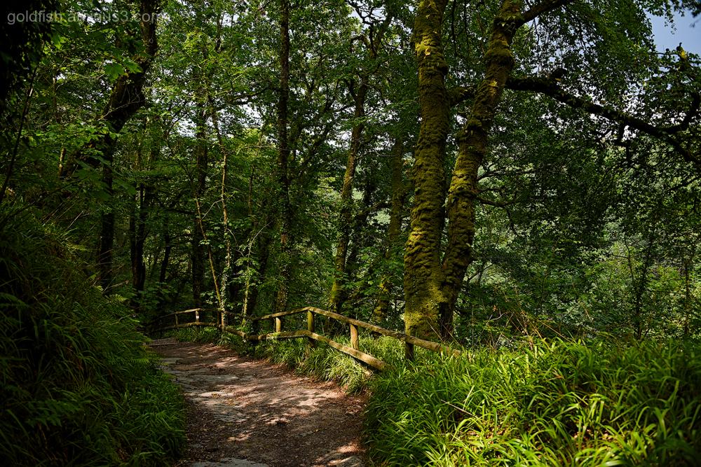Lydford Gorge, Cornwall V