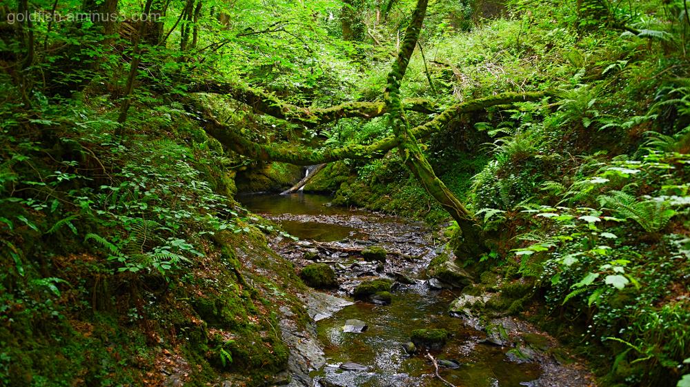 Lydford Gorge, Cornwall VI