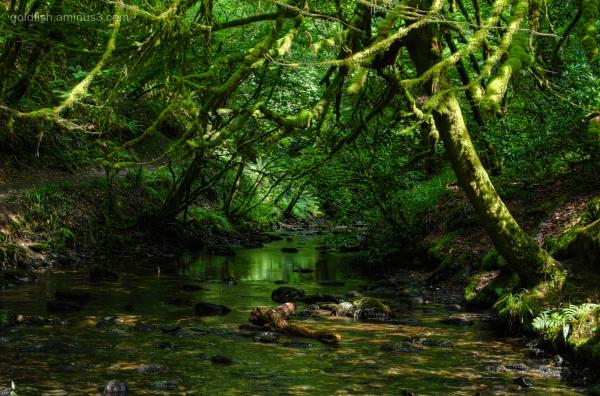 Lydford Gorge, Cornwall X