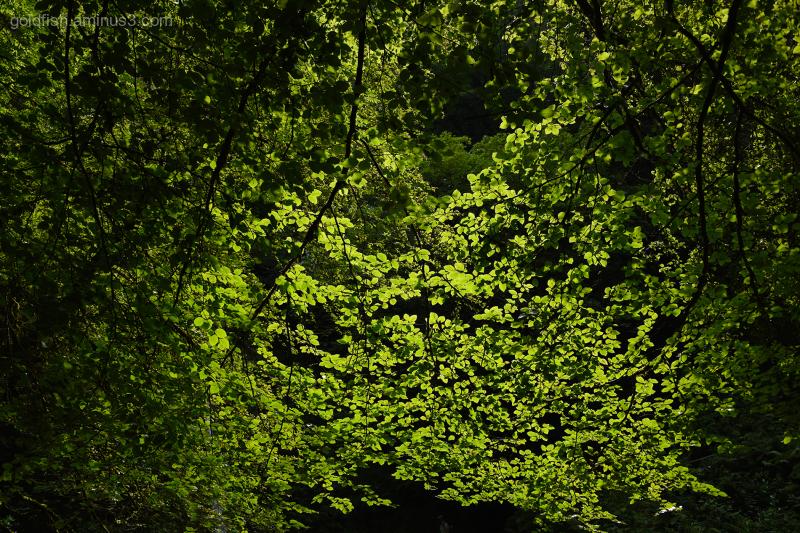 Lydford Gorge, Cornwall XI