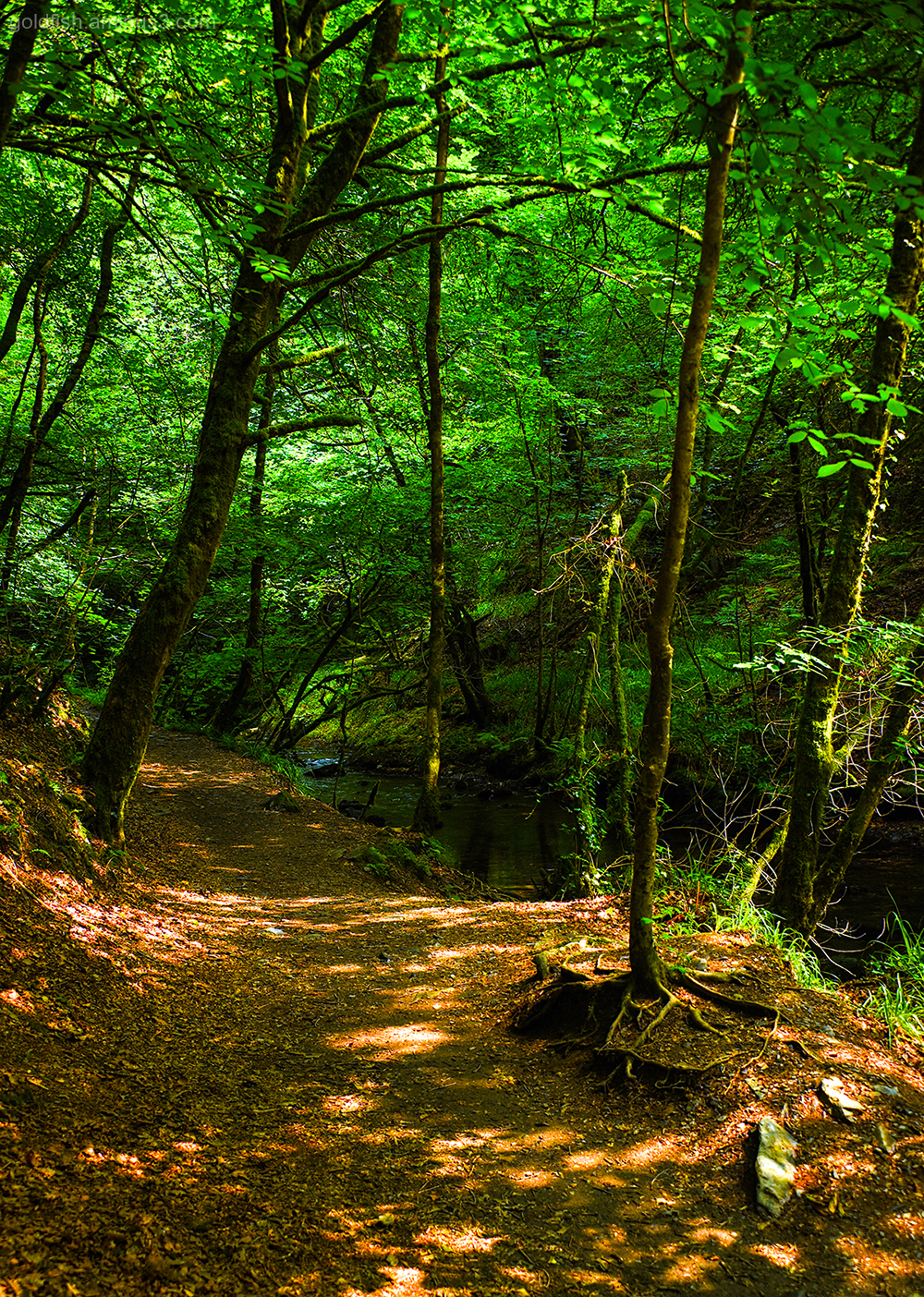 Lydford Gorge, Cornwall XII