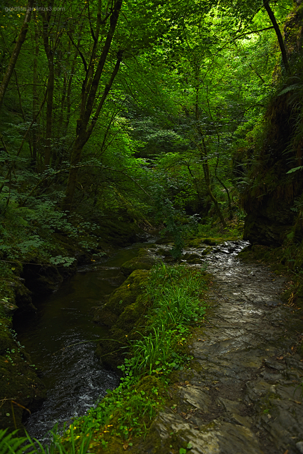 Lydford Gorge, Cornwall XIII