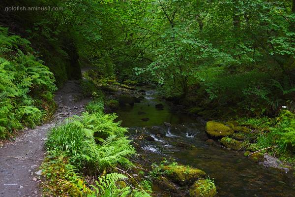 Lydford Gorge, Cornwall XIV