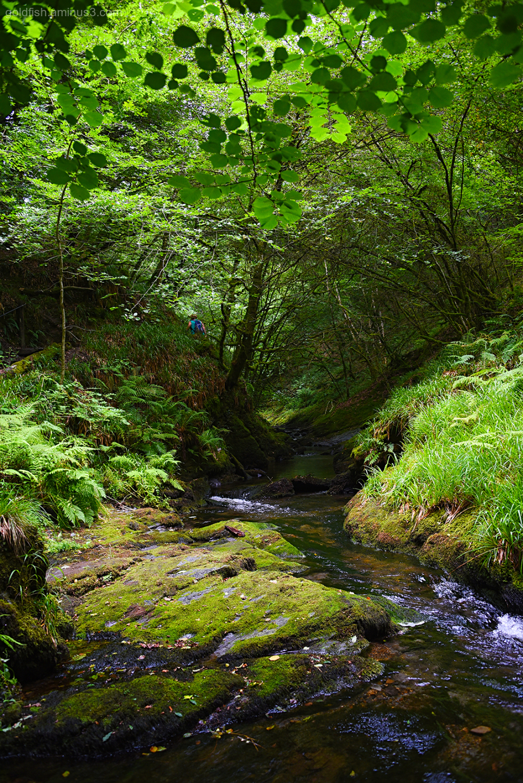 Lydford Gorge, Cornwall XV