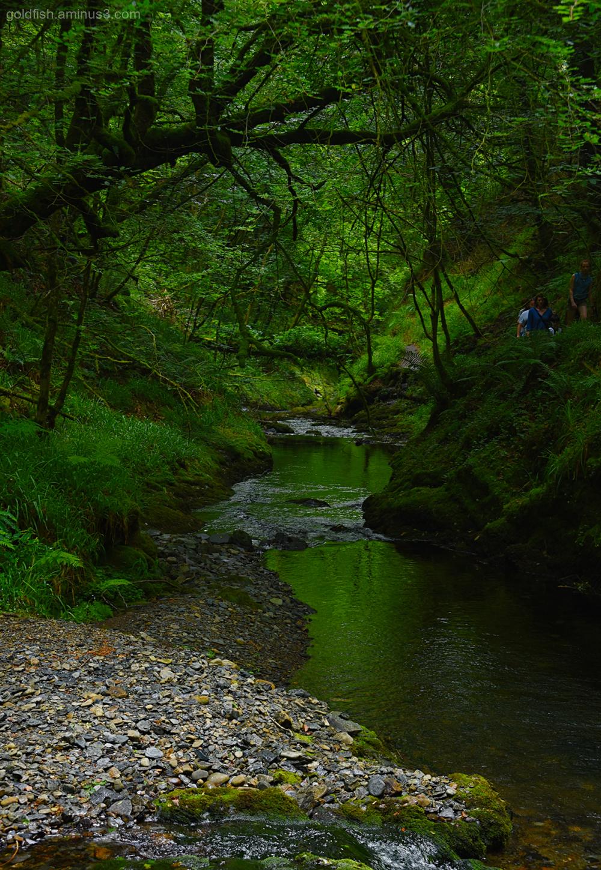 Lydford Gorge, Cornwall XVII