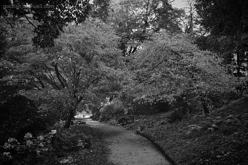 Bodnant Gardens XX