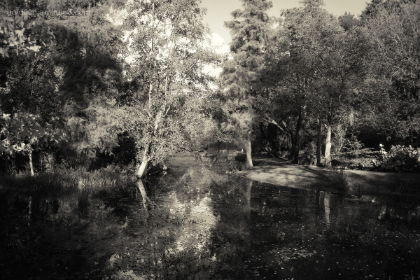 Bodnant Gardens XXXI