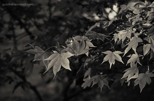 Bodnant Garden XXXIII