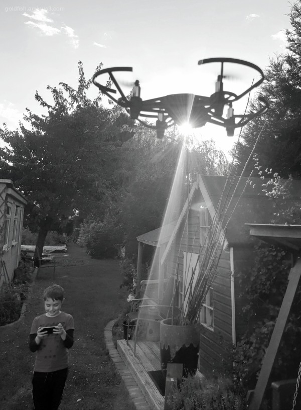 Lockdown Garden LXXII - Gethin & The Drone