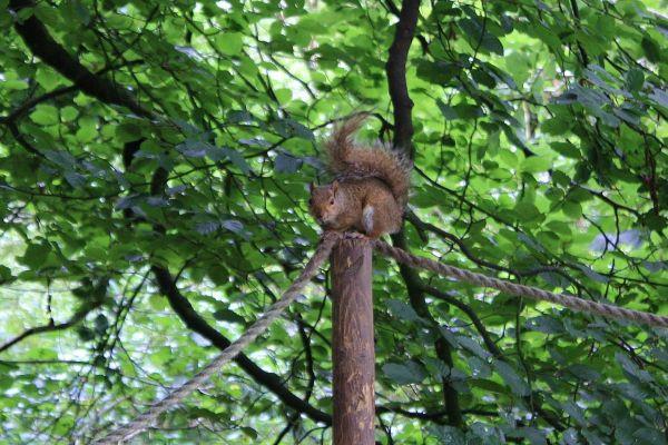 I am a squirrel