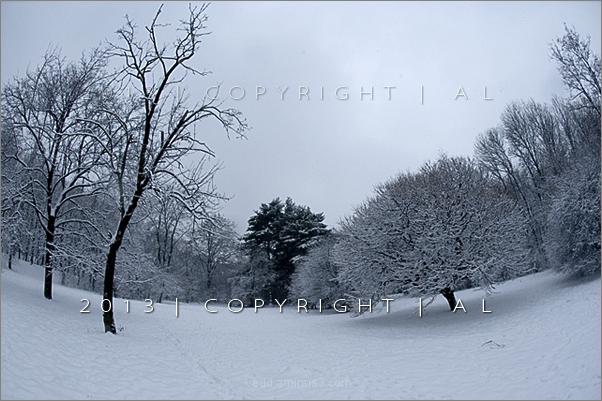 verdi winter
