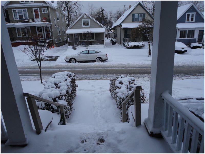 Buffalo SNOWED IN