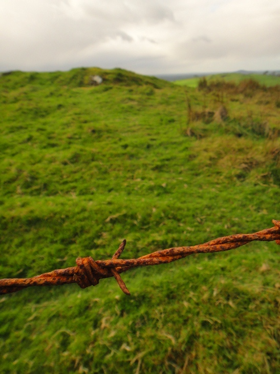 Rusty barbed wire Fence in county Meath, Ireland