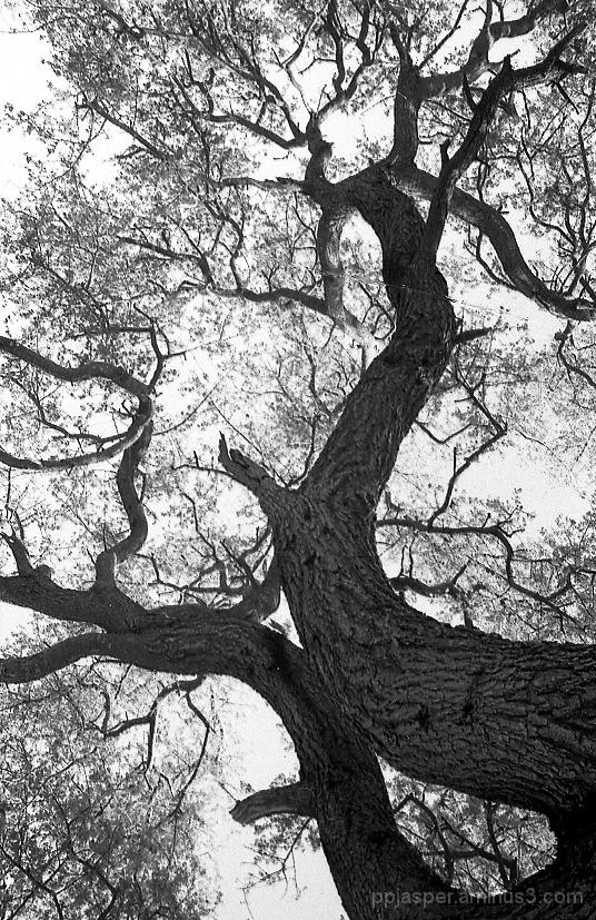 Tree Above my Head