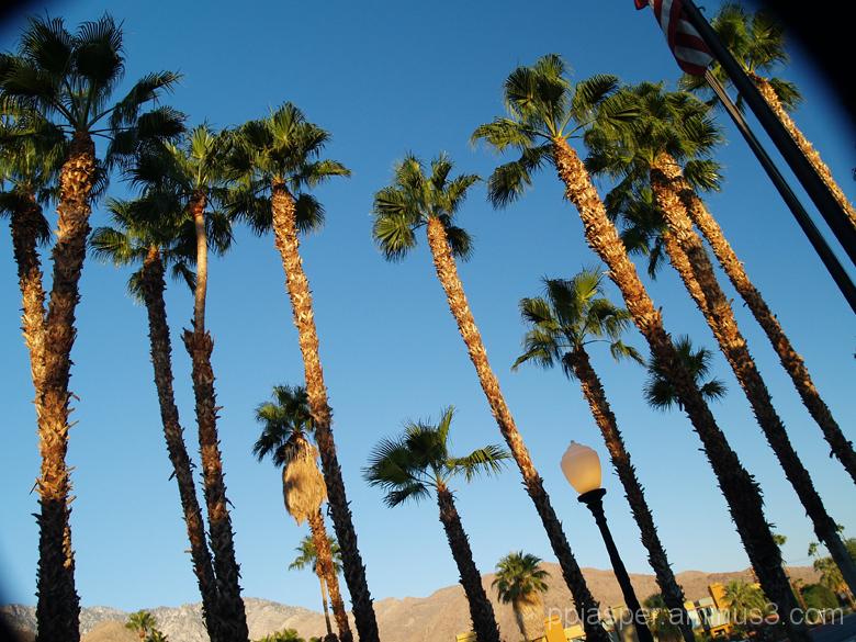 Palms - Palm Springs