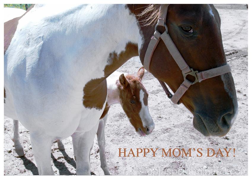 Mother Horse & Progeny