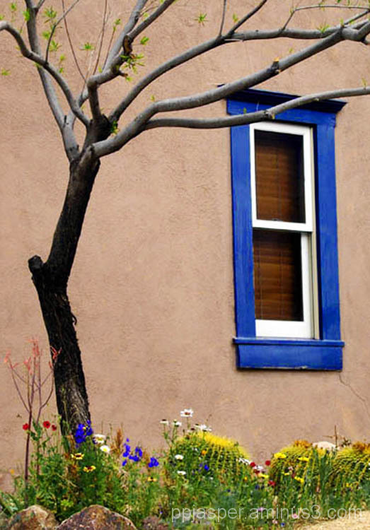 Barrio Window & Tree - Tucson
