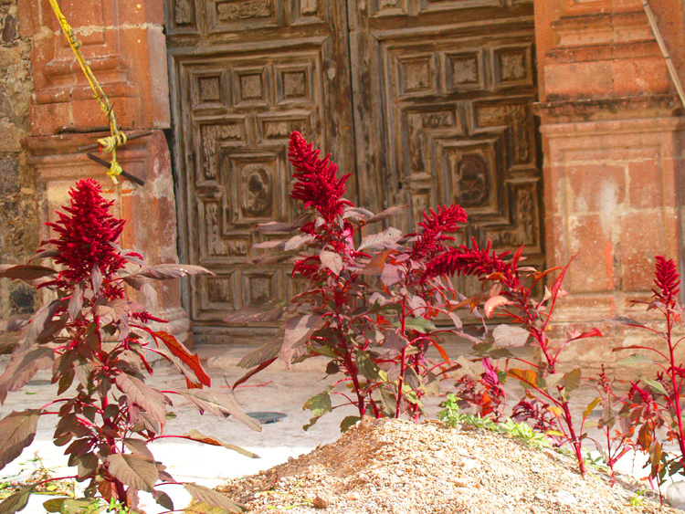 Amaranth & Old Church Doors