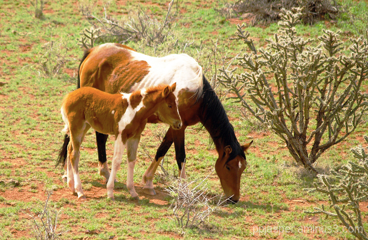Mare & Her Colt
