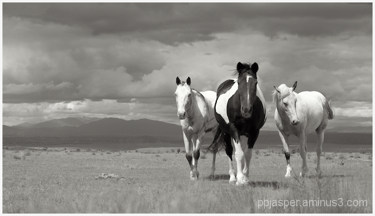 3 Horses - Galisteo