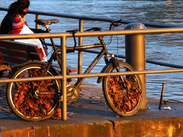 Nature & Transportation