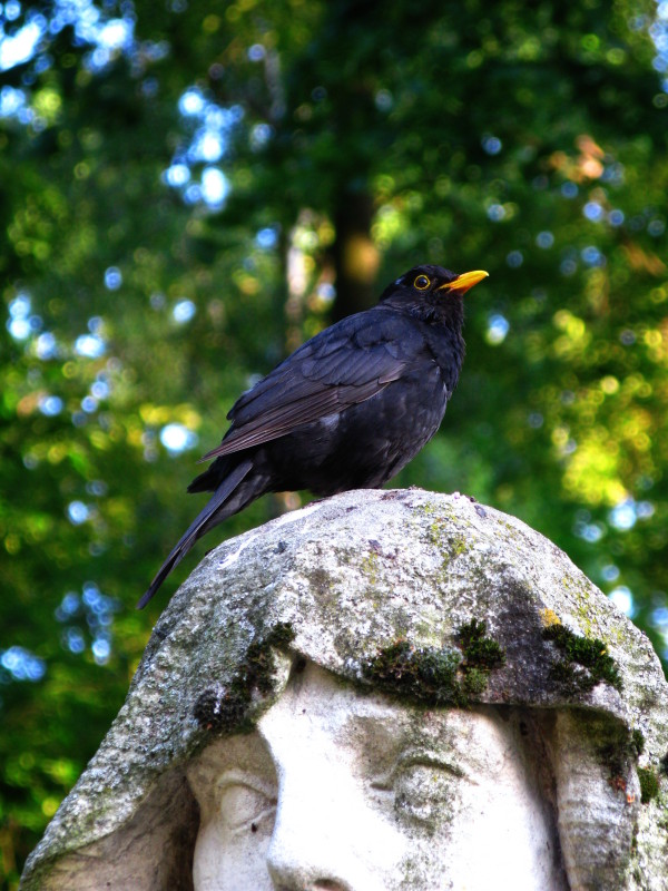 This Blackbird knows where its towel's at
