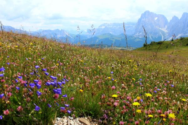 Floris Alpinis