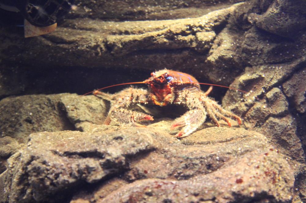 Lobster Lobby